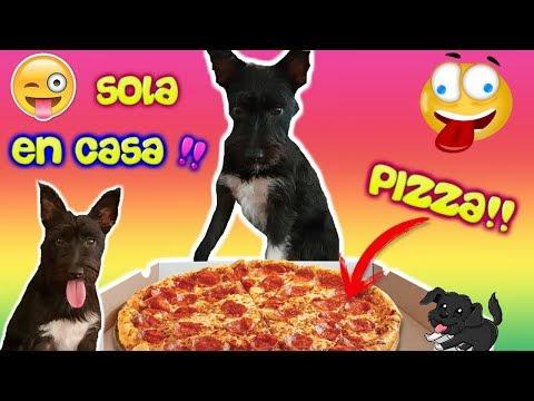 MI PERRO se queda SOLO EN CASA! Las travesuras de Lana! Funnydogs