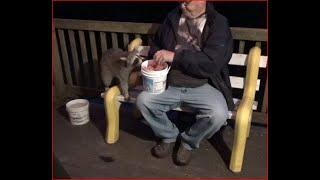 Raccoons  3rd July 2020 Friday
