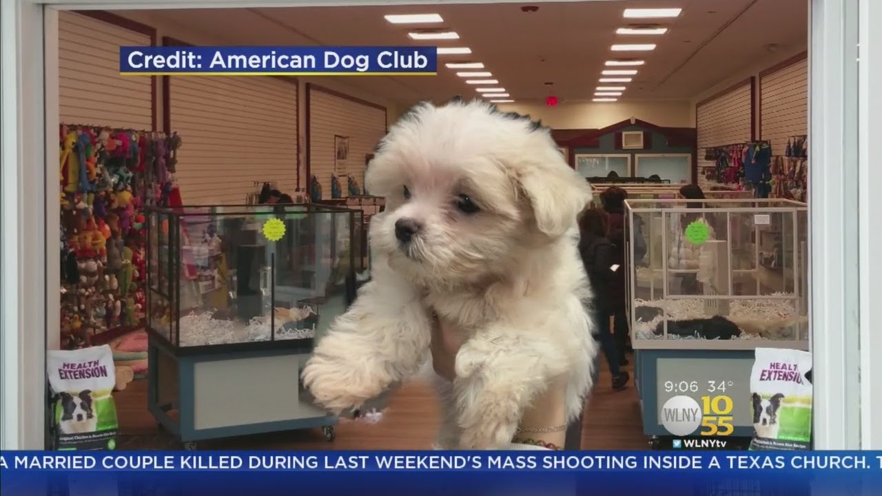Puppy Stolen From Pet Store Youtube