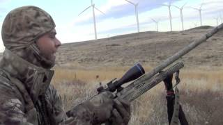 2013 Coyote Control Specialists Episode#1, Close Up Coyote, Coyote Hunting, Three Down