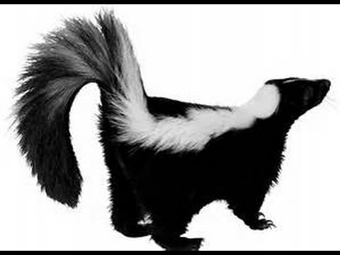 What Kind of Animal Are You? - Dead Skunks Still Stink