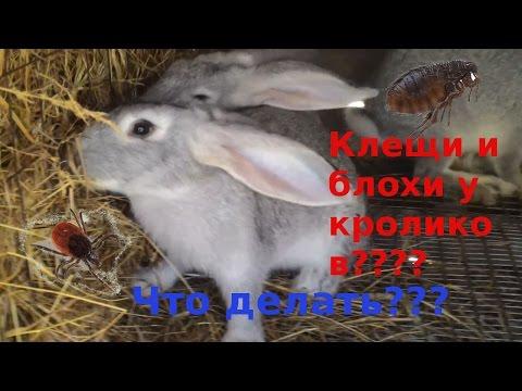 Вопрос: Бывает ли у крольчат рахит?
