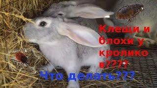 Клещи и блохи у кроликов.Что делать???(Вас приветствует канал StopTruck! Я заметил что на кроликах после их очередной прогулки появились клещи и блохи..., 2015-08-19T13:18:15.000Z)
