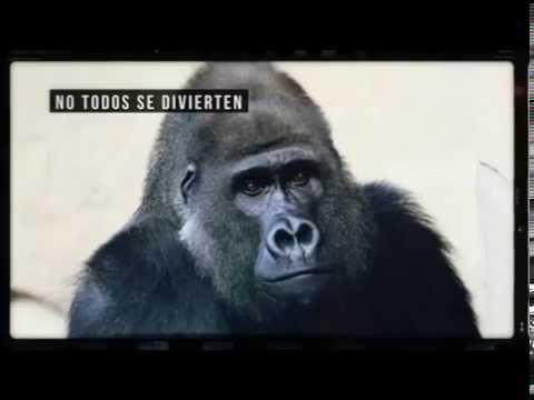 Circo Sin Animales Partido Verde