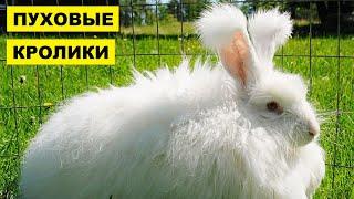 Разведение и содержание пуховых кроликов как бизнес идея | Кролиководство | Пуховые кролики