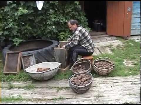 кедровые орехи, шишки, былое и думы.