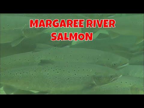 Margaree River Fishing | Cape Breton