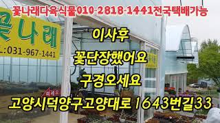 이사후/꽃단장/구경오세요  꽃나래다육식물010-2818…