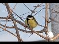 Шопен Танец Птиц Весенний Вальс mp3