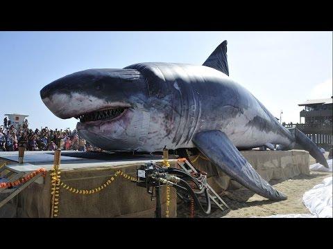 real megalodon encontrado el tibur n m s grande del mundo youtube. Black Bedroom Furniture Sets. Home Design Ideas