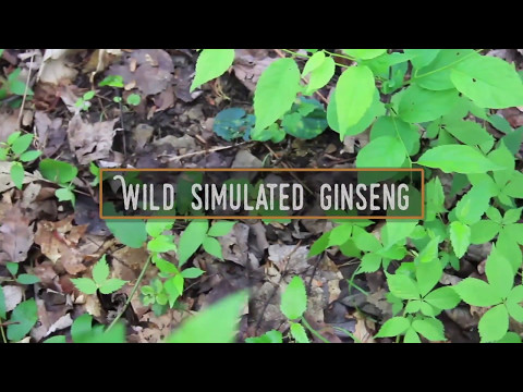 Wild Simulated Forest Farming