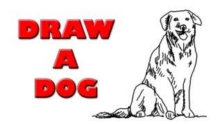 How to Draw a Beautiful Labrador Dog