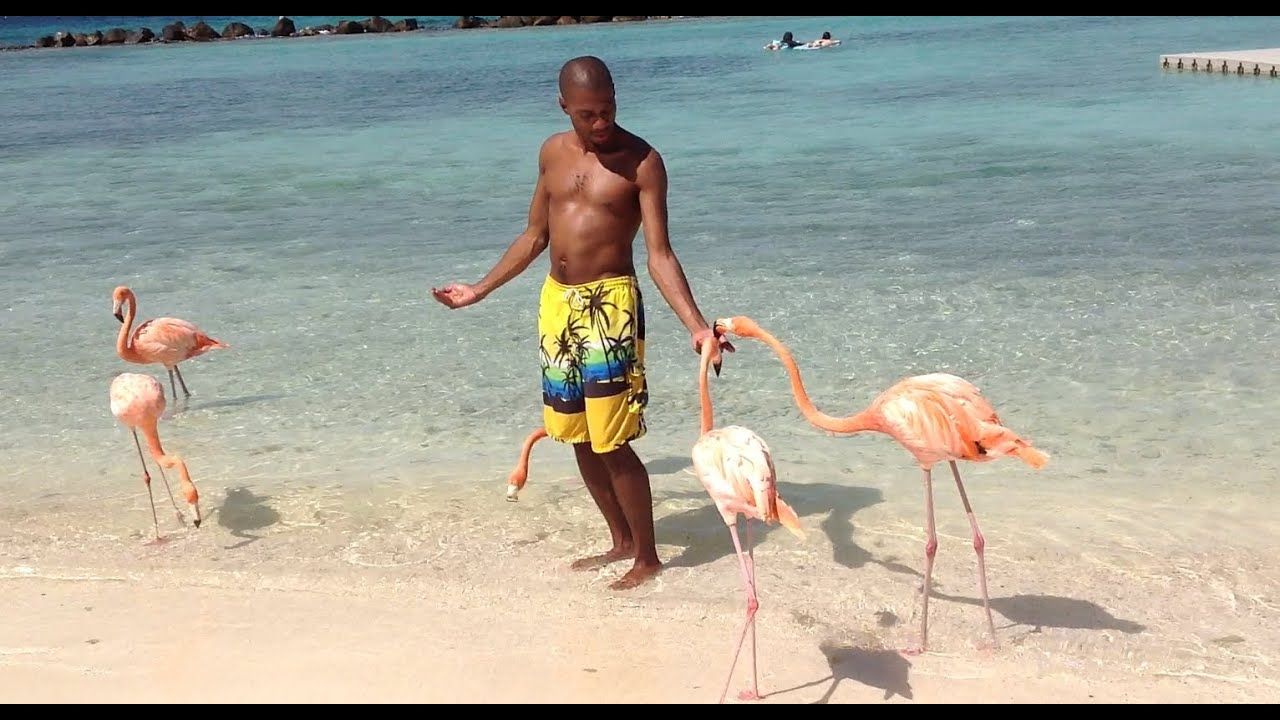 Flamingo beach victoria