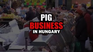 Pig Business in Hungary (Hungarian Subtitles)