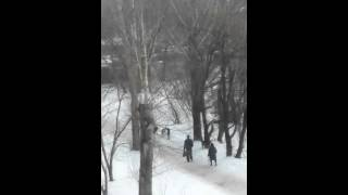 Пермь. Нападение собак на ребенка в Заостровке