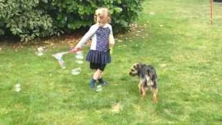 Bella Chasing Bubbles