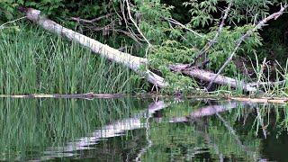 РЫБА КЛЮЁТ ТОЛЬКО ЗАКИНЬ! Рыбалка на сказочно красивой реке! Рыбалка летом на спиннинг.