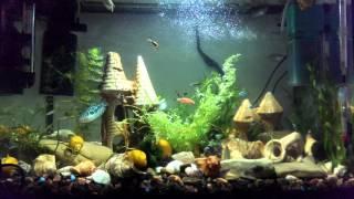 видео Акваріумні рибки