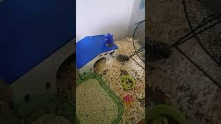아기 고슴도치 소개영상