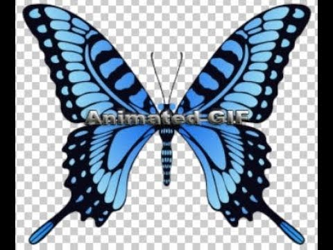 Animating A Butterfly Created In Adobe Photoshop As An Animated GIF 2019