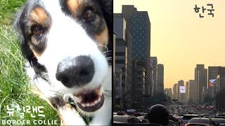 ENG) DOG home alone with Grandma  So much things to eat Korea Travel VLOG