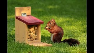 Best Funny Squirrel Video for Kids | Funny Animal Video