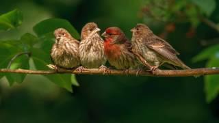 10 часов! Великолепное, насыщенное пение птиц Звуки природы Живой лес релаксация Birdsong