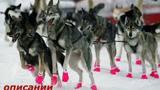Обувь для крупных собак в спб