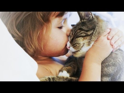 How Pets Transmit Diseases To Humans