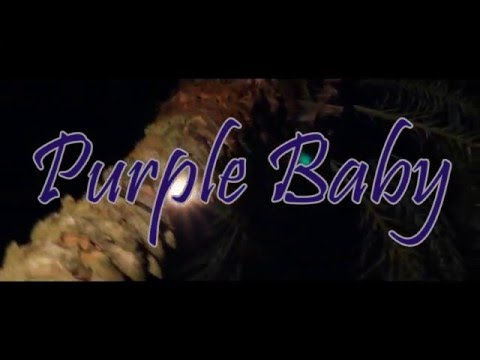 Purple Baby - Down Fa Dat (Official Music Video)