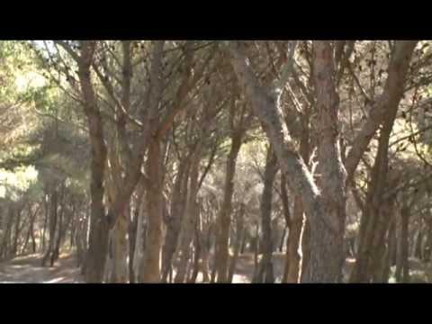 Foreste d' Italia - DOCUMENTARIO ISPRA