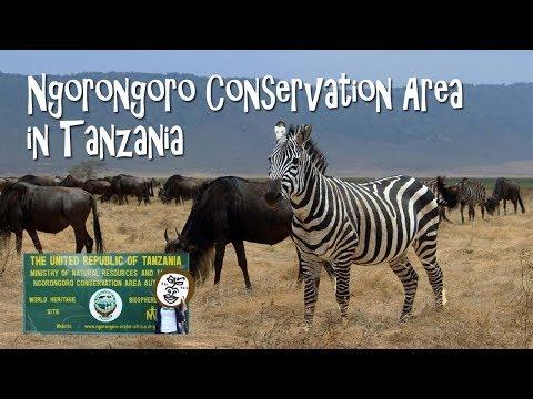 Wild Animals in Ngorongoro Crater  (Conservation Area )【 Travel Tanzania うろうろアフリカ 】タンザニア旅行