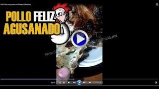 Pollo Feliz con gusanos en Meoqui Chihuahua