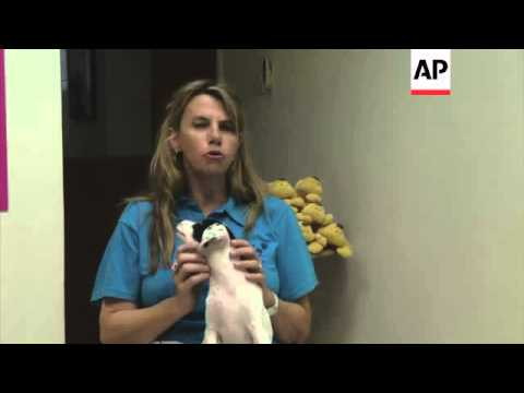 The pets abandoned as Dubai residents escape the summer heat