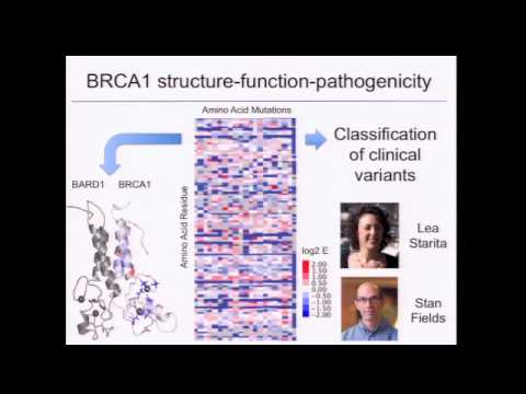 Measuring the Functional Consequences of Large Numbers of Human Genetic Variants - Jay Shendure
