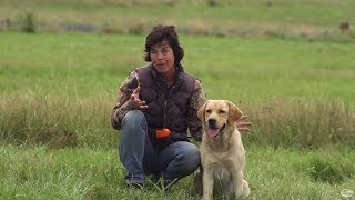Dog Training & Bird Hunting Tip: Get Your Dog Ready For Hunting Season