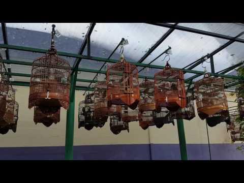 Teck  whye bird shop. Singapore