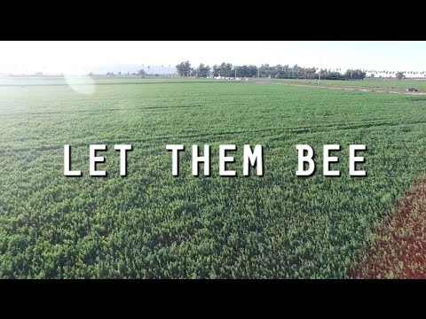 Let Them Bee
