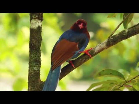 Nature and Wildlife Holiday Sri Lanka with Jetwing Travels