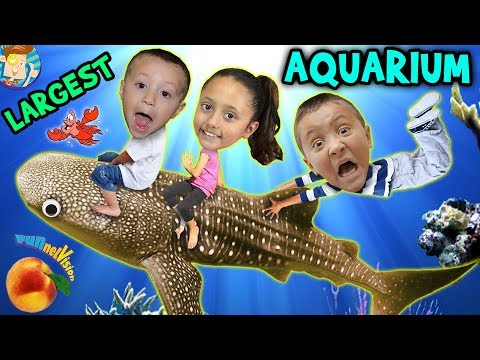 Family Trip To GEORGIA AQUARIUM World's Largest W  WHALE SHARK & Dolphin Tales Show ATL Vlog #1