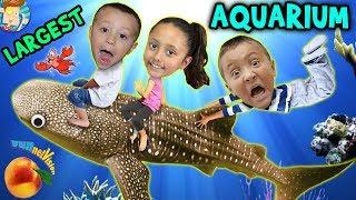 Family Trip to GEORGIA AQUARIUM World's Largest w  WHALE SHARK & Dolphin Tales Show ATL Vlog #1
