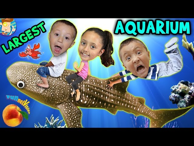 Family Trip to GEORGIA AQUARIUM Worlds Largest w  WHALE SHARK & Dolphin Tales Show ATL Vlog #1