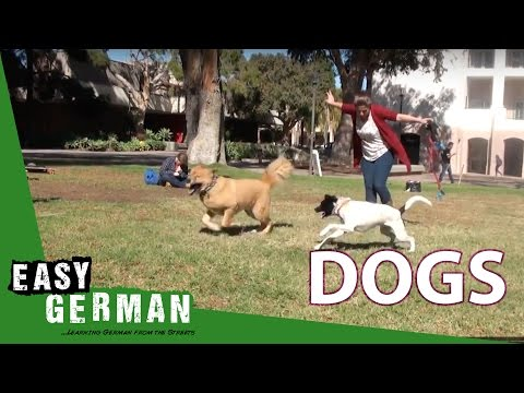 Giáo trình tiếng Đức A1- Bài 26: Zoe muốn nuôi chó