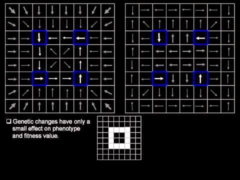 Solving The Eltrut Problem With Evolutionary Algorithms