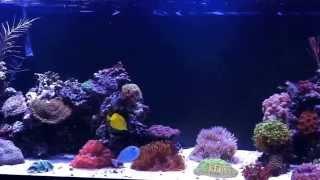 180 Gallon Reef Tank Build