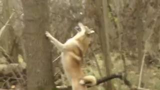 Охота на белку 2016 видео