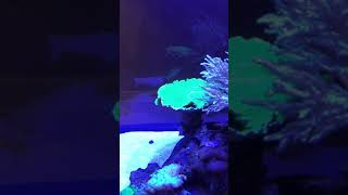 500 gal reef tank no music