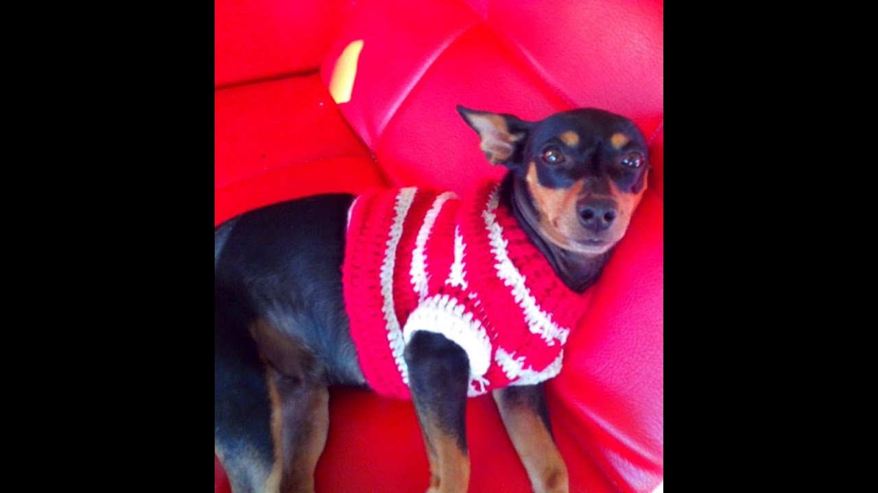 Sueter para Perro en Crochet - YouTube