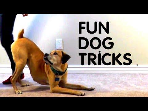 Teach Your Dog 8 Fun Tricks Using Clicker Training