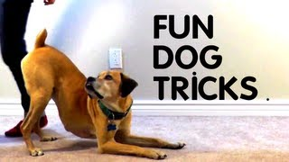 Teach Your Dog 8 Fun Tricks Using Clicker Training